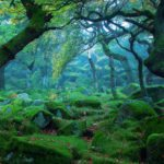 trees-forest-rocks-moss-nature-scenery-1920×1080
