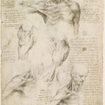 Leonardo_da_Vinci_-_Superficial_anatomy_of_the_shoulder_and_neck_recto_-_Google_Art_Project
