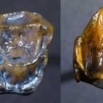 Ancient-Fossilized-teeth