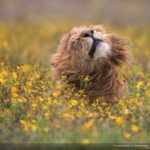 concours-photos-nature-national-geographic-2017-001