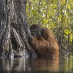 concours-photos-nature-national-geographic-2017-003