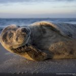concours-photos-nature-national-geographic-2017-004