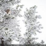 concours-photos-nature-national-geographic-2017-008