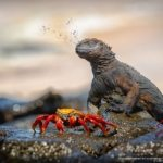concours-photos-nature-national-geographic-2017-011