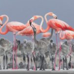 concours-photos-nature-national-geographic-2017-021