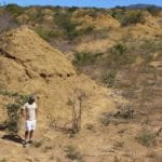 this-image-shows-mound-fields.-the-mounds-are-found-in-dense-low-dry-forest-caatinga-vegetation-and-can-be-seen-when-the-land-is-cleared-for-pasture3.-credit-roy-funch